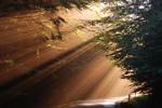 siegerfoto morgenlicht