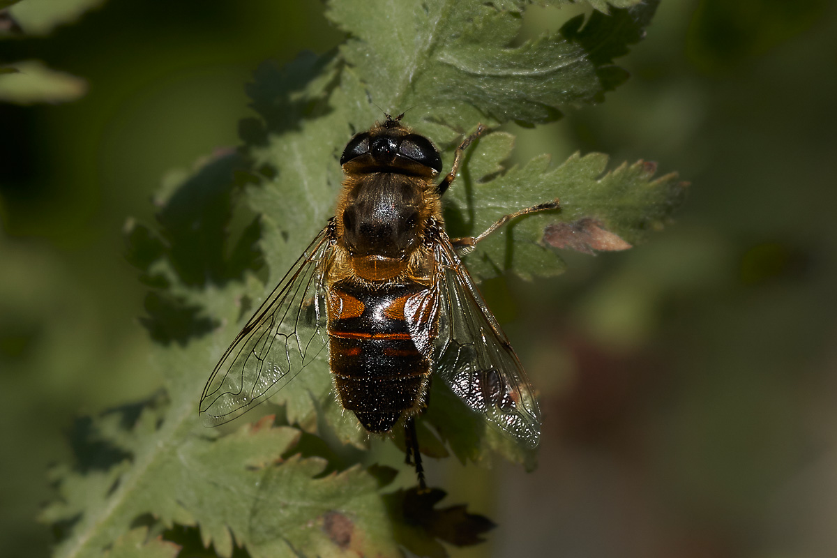 Fotowettbewerb 2019 - Thema Insekten