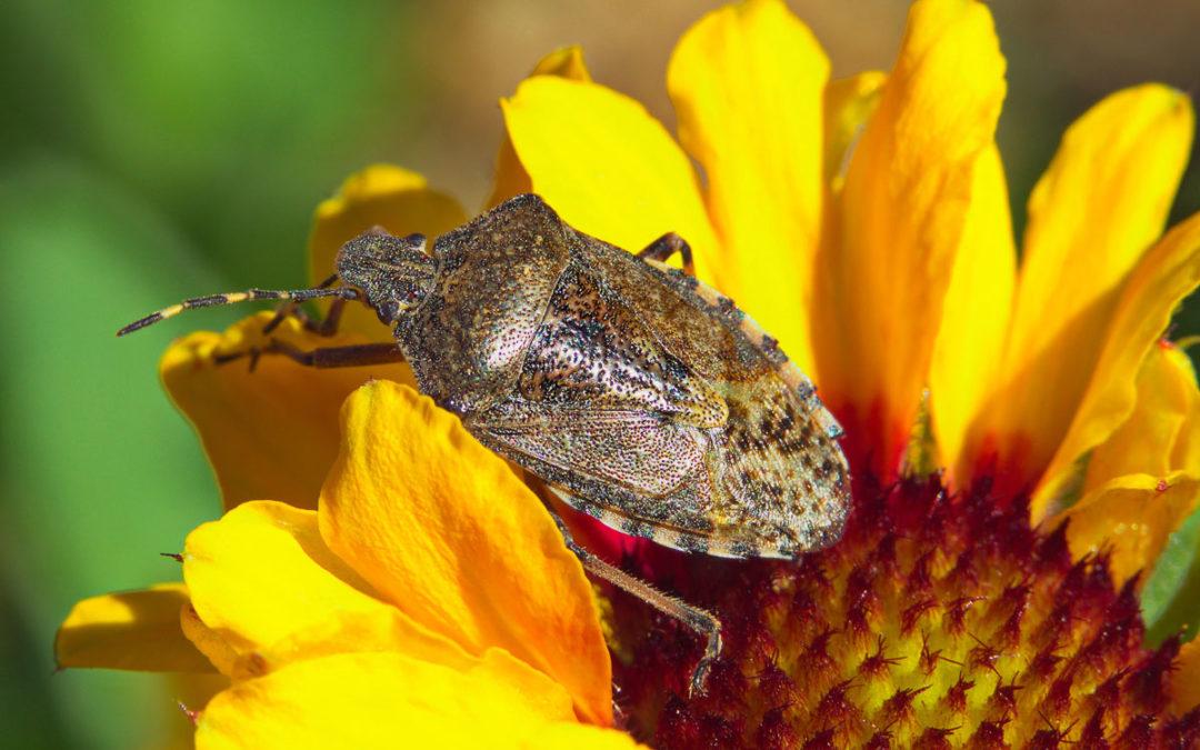 Fotowettbewerb Thema: Insekten